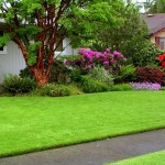 Прекрасный газон а вашем саду