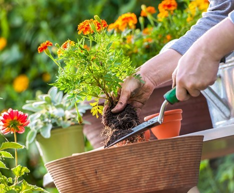 как ухаживать за растениями летом